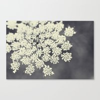 Black and White Queen Annes Lace Canvas Print