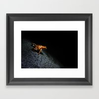 Poison Dart Frog Framed Art Print