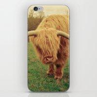 Scottish Highland Steer - regular version iPhone & iPod Skin