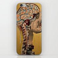 Human Brain  iPhone & iPod Skin