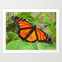 Monarch Butterfly 2015 Art Print