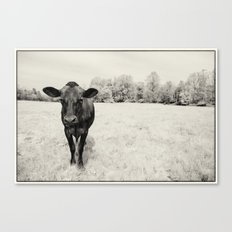 Turkey the Cow Canvas Print