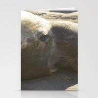 Elephant Seal: Contemplation Stationery Cards