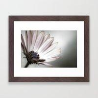 pink daisy. Framed Art Print