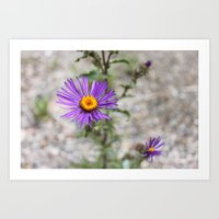 Purple Wild Flower Art Print