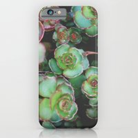 iPhone & iPod Case featuring Succulents II by Christine Hall
