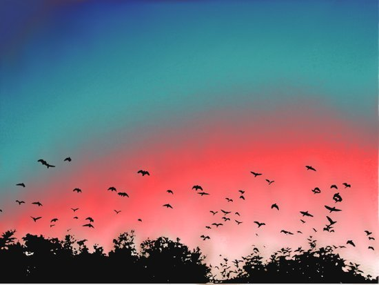 Birds Flying High Art Print