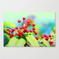 Canvas Print featuring Red Autumn Berrys by Die Farbenfluesterin