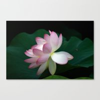 Bee line to the Lotus Canvas Print