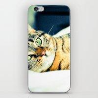 Кошка iPhone & iPod Skin
