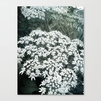 Lace Canvas Print