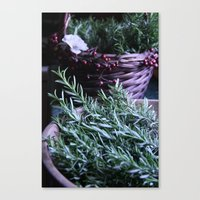 Rosemary Collection Canvas Print