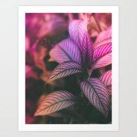 Violet Ladder Art Print
