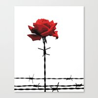 Barbed wire red rose Canvas Print