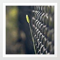 Twig & Fence Art Print
