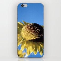 Bulging Sunflower iPhone & iPod Skin