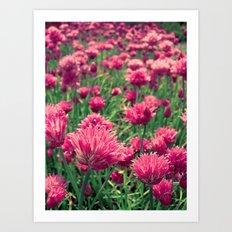 pink field Art Print