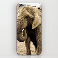Elephant. iPhone & iPod Skin