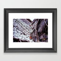 Vines. Framed Art Print