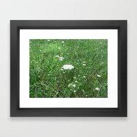 Queen Anne's Lace/field Framed Art Print