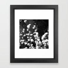 Cottton Framed Art Print