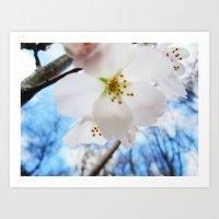 Cherry Blossom-1 Art Print