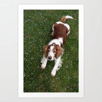 Welsh Springer Spaniel -… Art Print