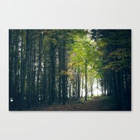 Young Tree Canvas Print