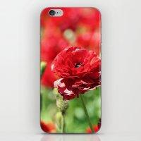 Scarlet Field iPhone & iPod Skin