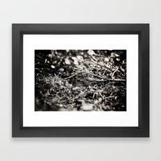 Ocklawaha  Framed Art Print