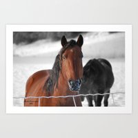 Winter Horse Art Print