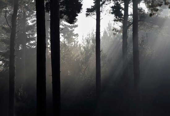 sun light through forest mist Art Print