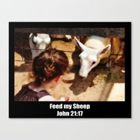 Feed My Sheep - Poster Canvas Print