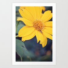 Yellow Jacket Hides Art Print