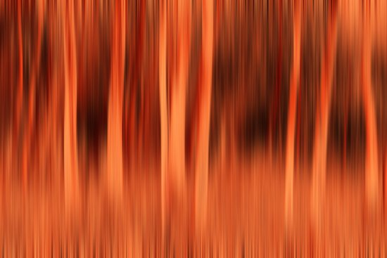 Fiery Forrest Canvas Print