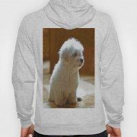 Coton de Tulear Puppy Hoody