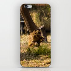 Monkey Business II iPhone & iPod Skin