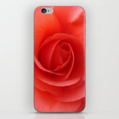 Rose Delicate iPhone & iPod Skin