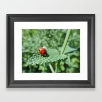 Ladybug On A Leaf Framed Art Print