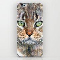 Street Cat portrait CC1402 iPhone & iPod Skin
