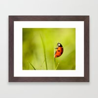 On top of a Grass Framed Art Print