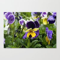 Violets on a rainy morning Canvas Print