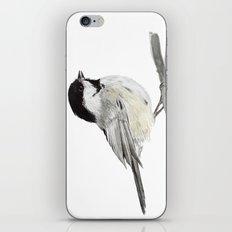 La Mésange à tête noire (Poecile atricapillus) Black-capped chickadee iPhone & iPod Skin