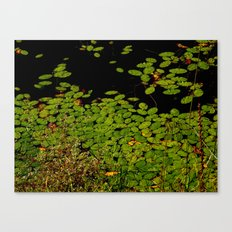 Sprinkles of green Canvas Print