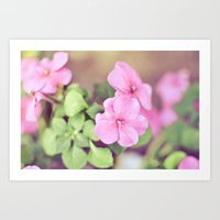 Soft Pinkness Art Print