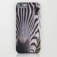 iPhone & iPod Case featuring zebra by Cindy Munroe Photography