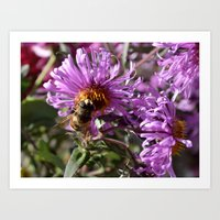 Busy Bee On A Violet Flo… Art Print