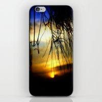Sunset between pine Needles iPhone & iPod Skin