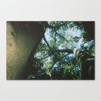 Adelaide Leaves Canvas Print