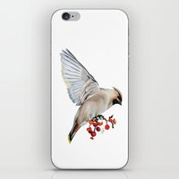 Waxwing iPhone & iPod Skin
